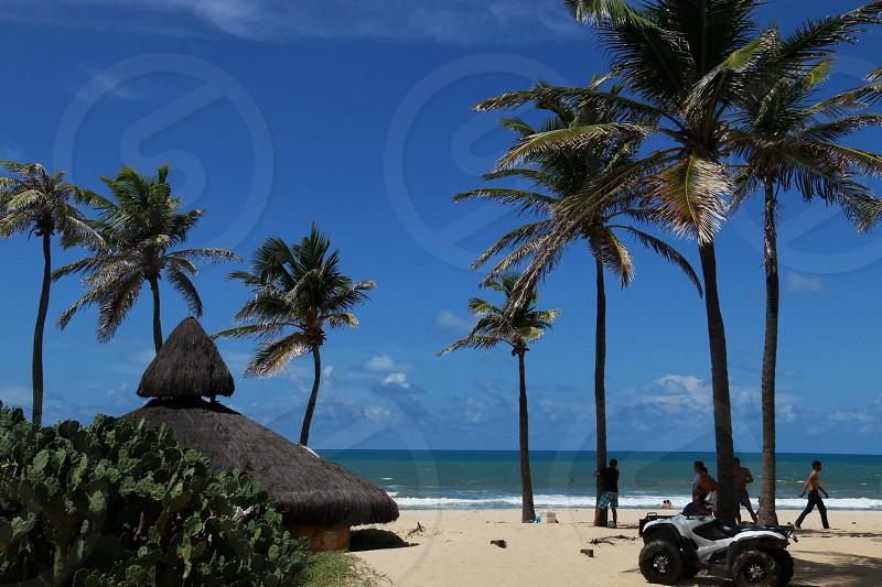 beach hut with palm trees photo