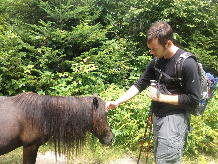Brian and wild ponies photo