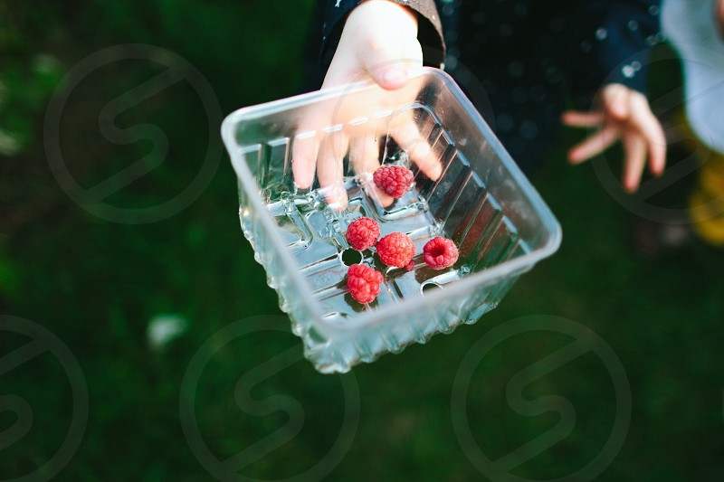 5 raspberries on clear plastic container held by child photo