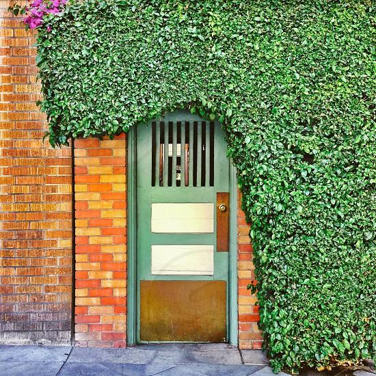 Doorway greenery hedge  photo