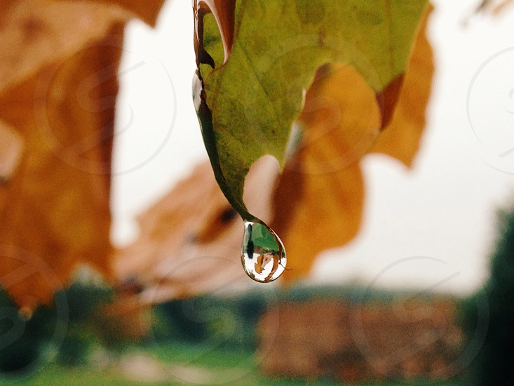 water droplet on tip of green leaf during daytime photo