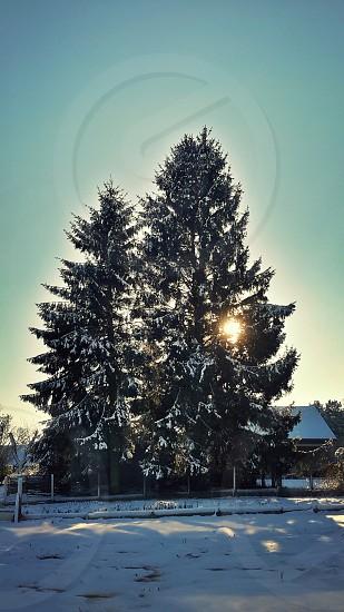 sunrise in the snow photo