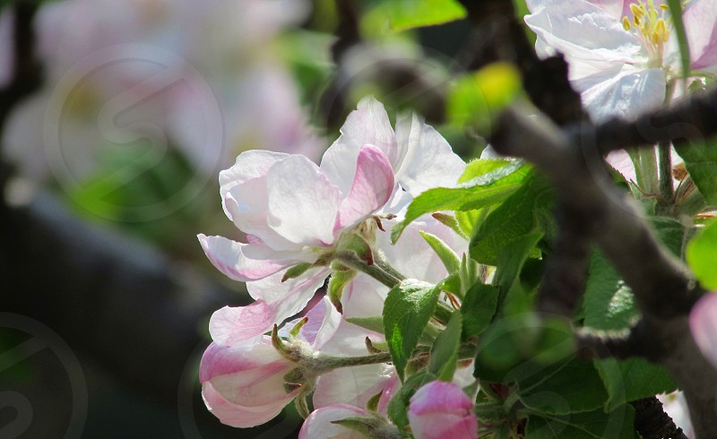 pink and white petaled flowers photo