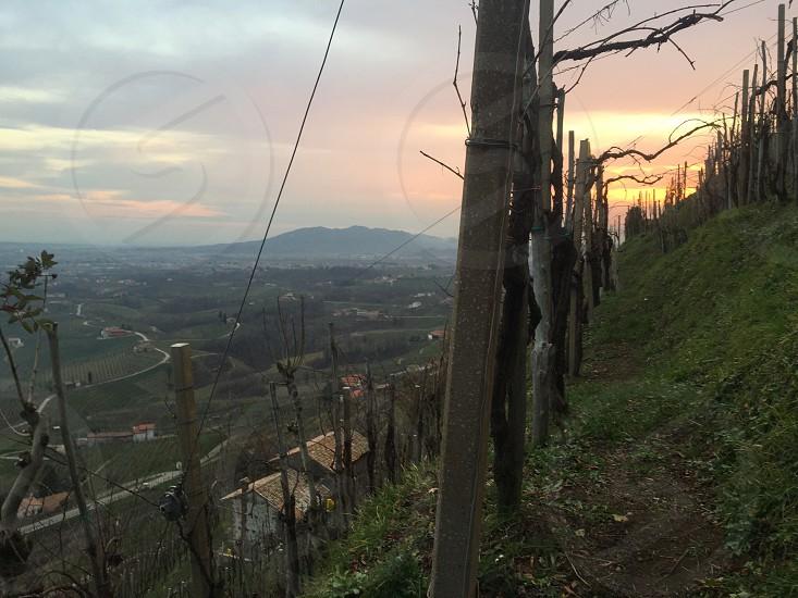 line of wood posts on hillside photo