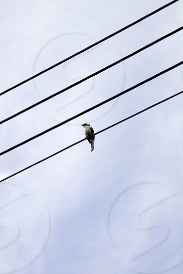 Bird on Wire photo
