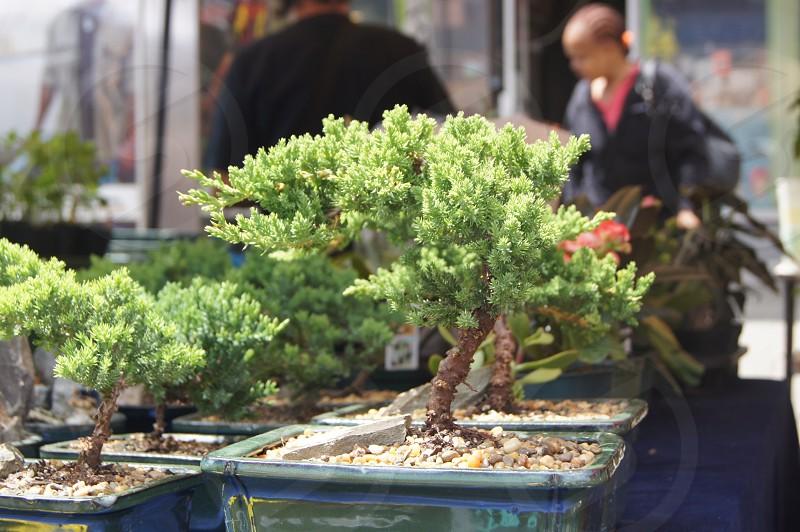 green bonsai plant photo