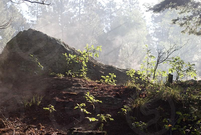 mountain green trees photo
