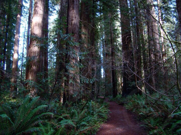 The RedWood Forest... photo