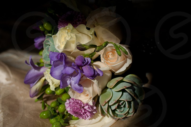 white rose green succulent and purple orchid   photo