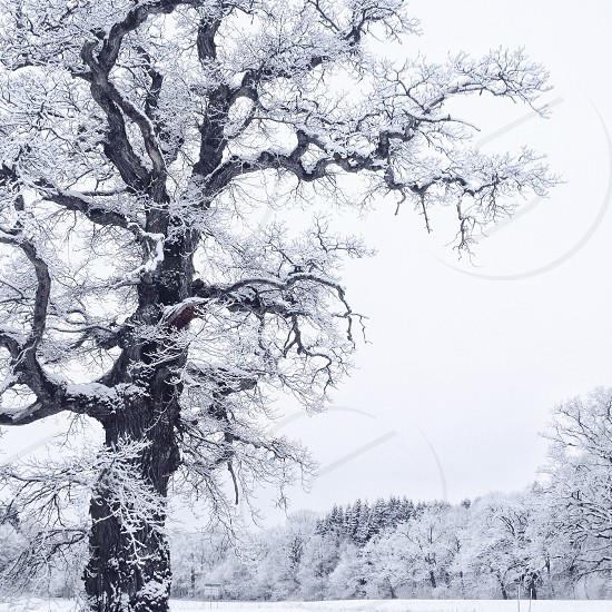 snow covered trees grayscale photography photo