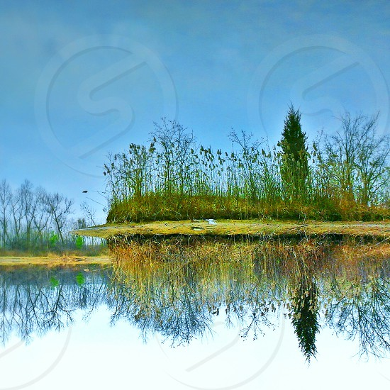green forest with lake photography photo