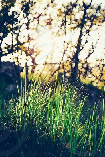 Nature grass summer summer evening sunshine sun sun rays  green background  backgrounds backdrops backdrop structure abstract photo
