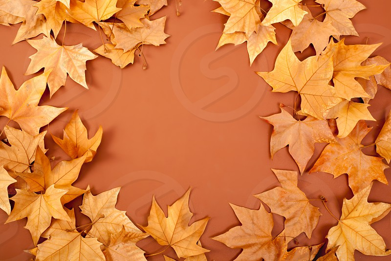 autumn fall dried leaves border fame on brown background copyspace photo