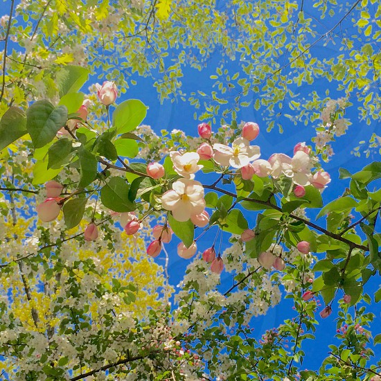 Spring tree natural light happiness flower blue Sky  photo