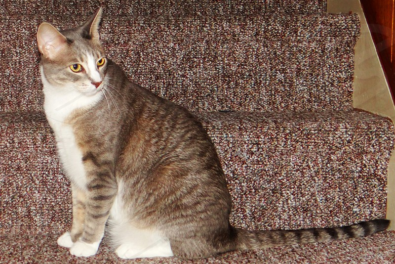 cat steps stairs photo