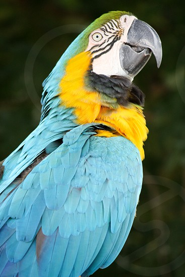 selective focus photography of blue and yellow macaw photo