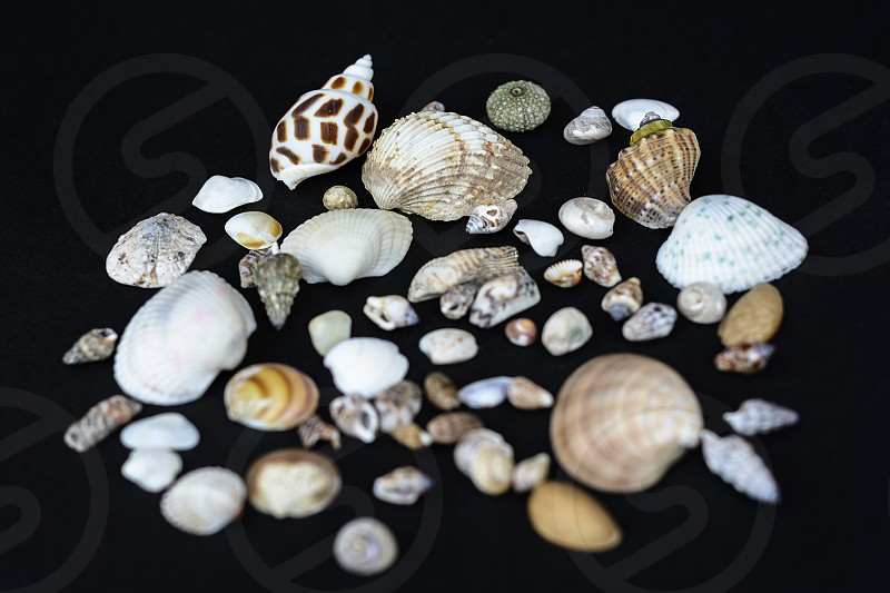 Sea shells collection photo