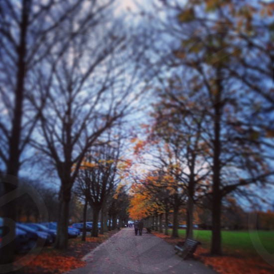 Greenwich Park London photo