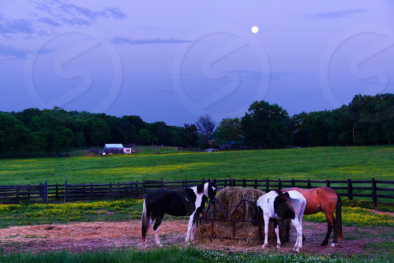 horses on ranch photography photo
