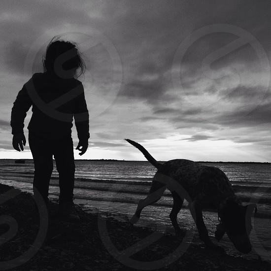 dog walking on the sea shore photo