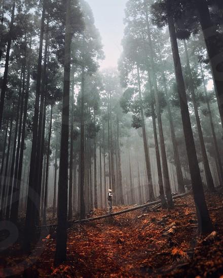 nature fog forest light color  photo