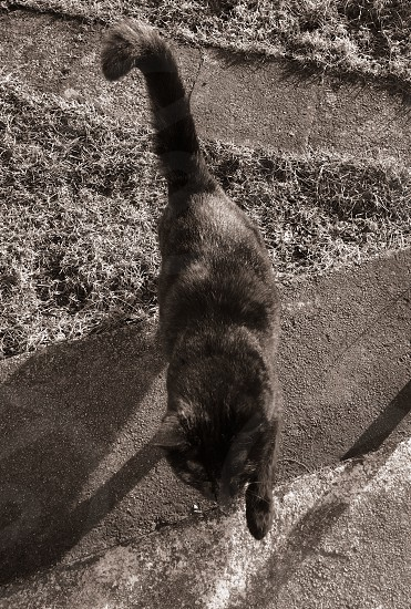 cat on concrete stairs in grayscale photo