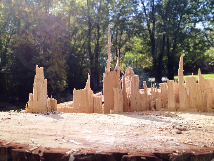 "Can you guess what this ""cityscape"" is made of? Completely natural from a tree fallen in my yard.  photo"