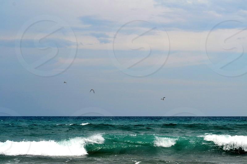 Three Sandpipers in flight over cresting ocean wave photo