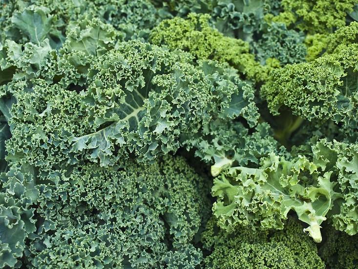 green kale on a field photo