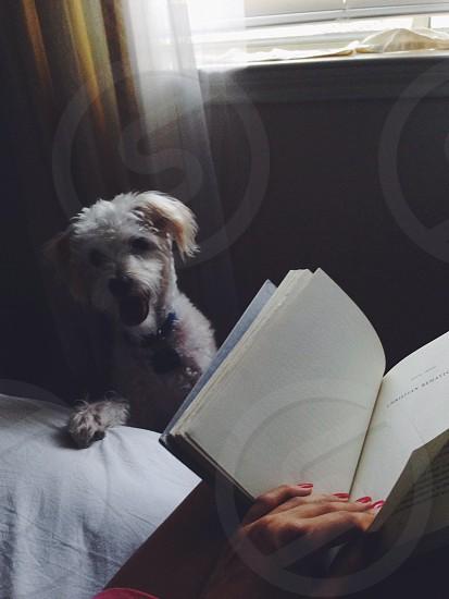 open book near dog photo