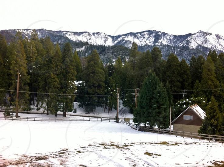 Snow days  photo