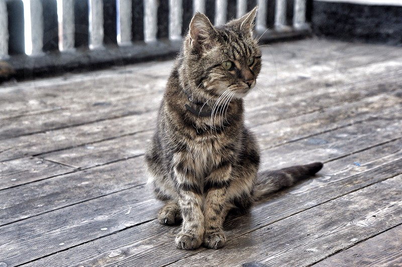 brown tabby cat at the porch photo