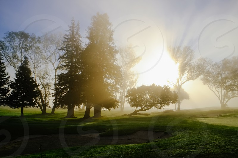 sunrise over green trees on green grass field photo