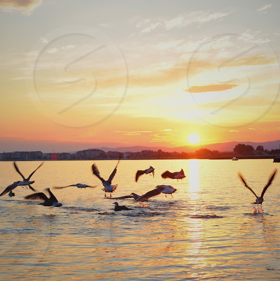 birds flying on sea surface under cloudy sky during sunset photo