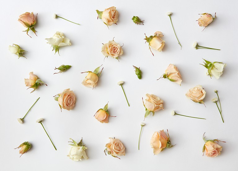 Various soft roses and leaves scattered on a white background overhead view. Flat lay photo