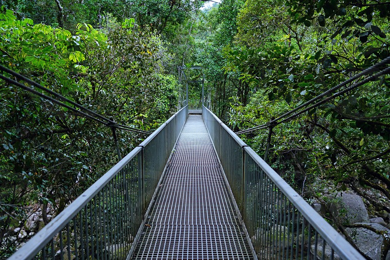 A pedestrian cable suspension bridge over the Daintree Rainforest in Australia photo