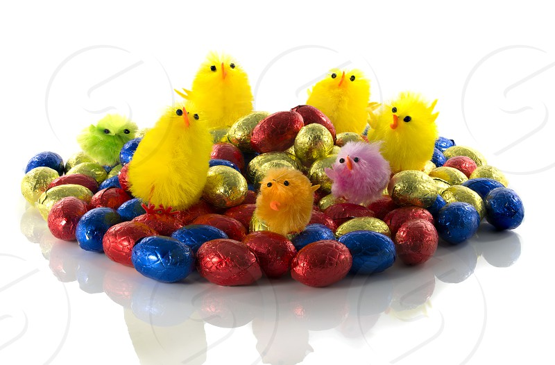 easter eggs and chicken isolated on white background photo