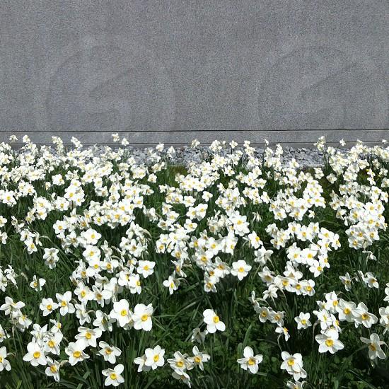 white and yellow flowers photo