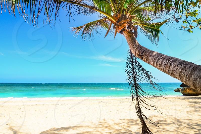 Palm tree near the shore of the White Beach in Boracay photo