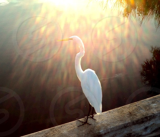 white long beak bird on wall photo