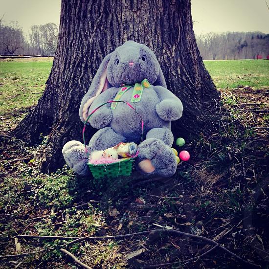 grey rabbit plush on brown tree stem photo