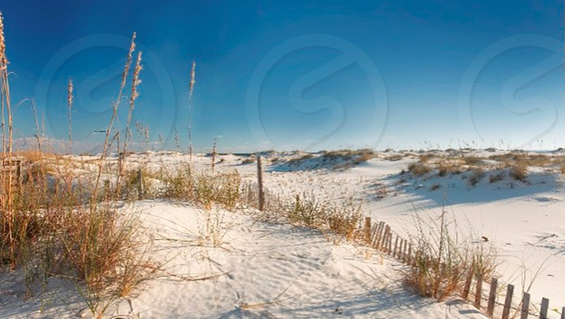 Sand dunes at the beach in Orange Beach Florida photo