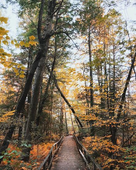footbridge between forest during autumn photo