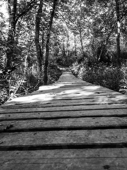 A bridge to somewhere Black and White photo