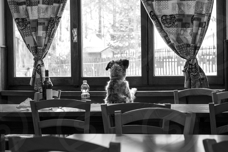 A curious dog looks out the window of a refuge in the mountains photo