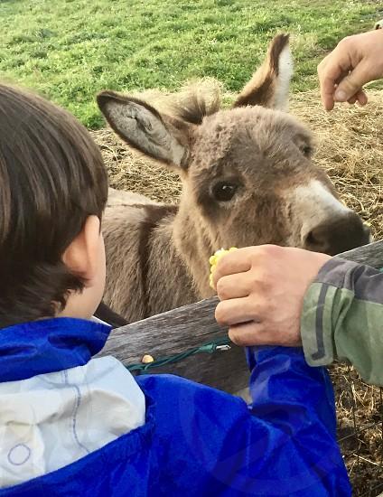 Cute donkey photo
