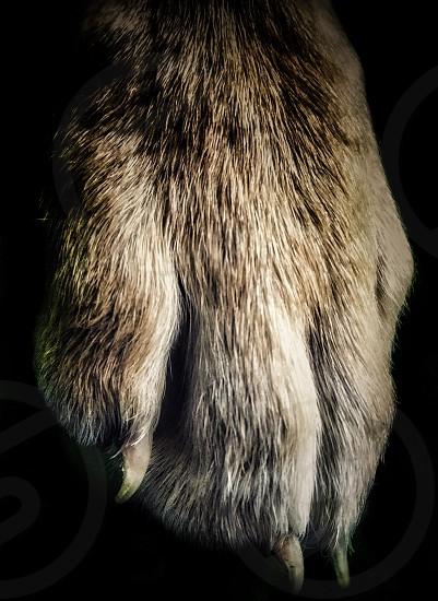 closeup photo of brown animal paw photo