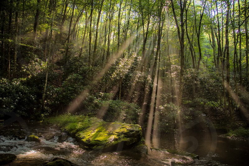 forest with pond and sun rays  photo