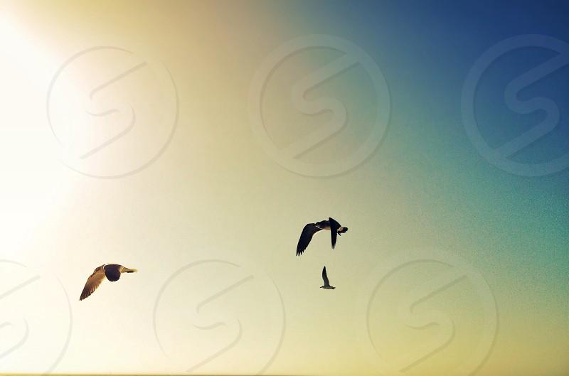3 flying birds photo