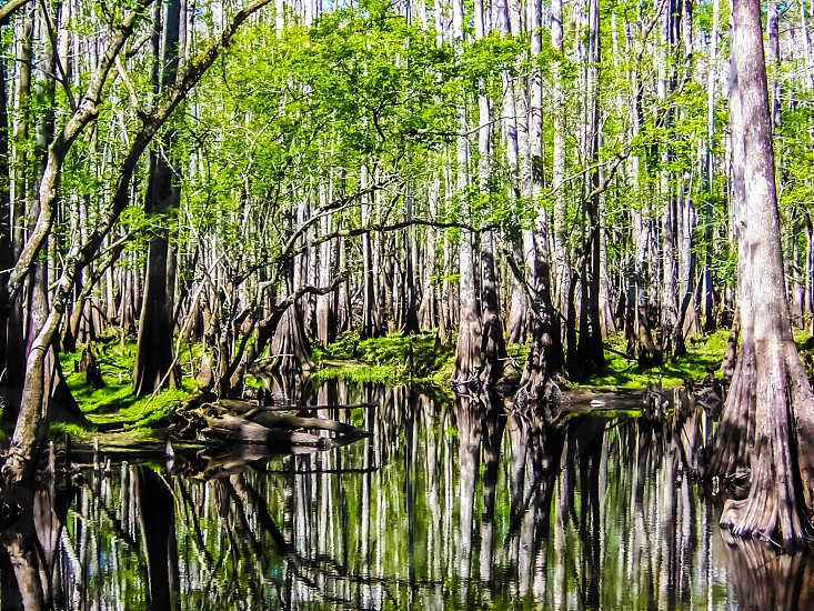 Fl Everglades photo